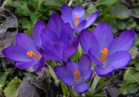 wiosenne kwiaty (2).jpeg