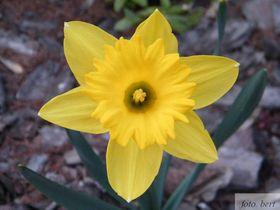 wiosenne kwiaty (3).jpeg