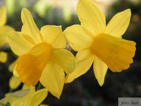 wiosenne kwiaty (8).jpeg