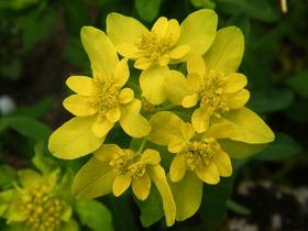Rododendrony z ogrodu botanicznego w Zagwiździu (19).jpeg