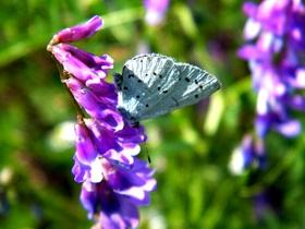 Motyle Zagwiździa (1).jpeg