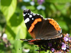 Motyle Zagwiździa (5).jpeg