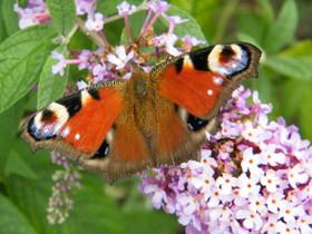Motyle Zagwiździa (7).jpeg