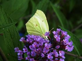 Motyle Zagwiździa (8).jpeg