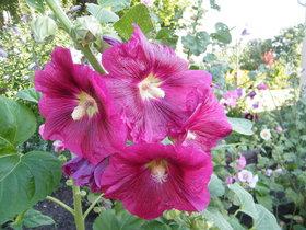 Kwiaty Zagwiździa (15).jpeg