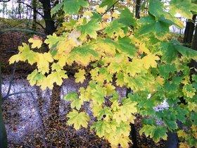 Widoki jesieni w Zagwiździu (6).jpeg