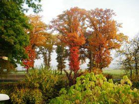 Widoki jesieni w Zagwiździu (14).jpeg