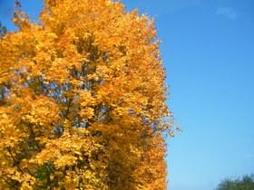 Widoki jesieni w Zagwiździu (21).jpeg
