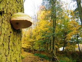Widoki jesieni w Zagwiździu (24).jpeg