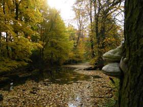 Widoki jesieni w Zagwiździu (30).jpeg